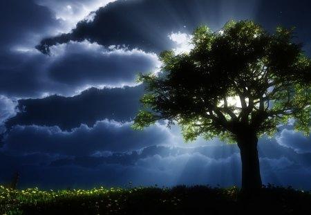 Night shine - shine, dark, night, tree, nature