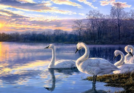 Swan Family - sky, evening, clouds, nature, artwork, lake