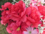 Rosey Red Flowers
