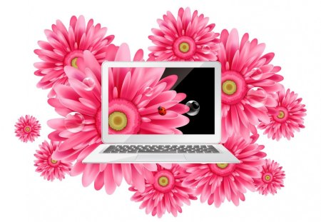 Gerbara laptop - pink, flowers, gerbera, pc, laptop, daisy
