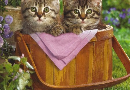 Tabby kittens in a picnic basket - grass, basket, tabby, tablecloth, kitten