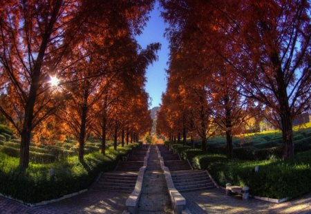 Step into Autumn - red, fall, autumn, orange, line, stairs, trees, leaves, green, turn, steps