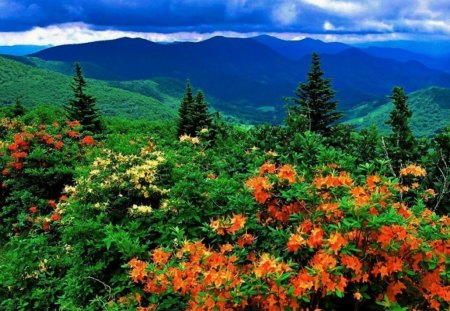 Wild Azaleas - hills, colorful, fall, wildflowers, colors, spring
