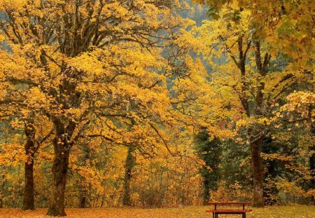 All One Color Autumn - fall, autumn, orange, amber, bench, park, trees
