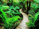 Fern Path to the Forest