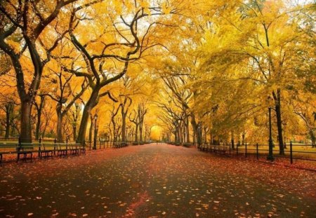 Take an Fall Stroll Through a Golden Park - autumn, sun, yellow, park, trees, gold, walkway, path, walk, stroll