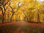 Take an Fall Stroll Through a Golden Park