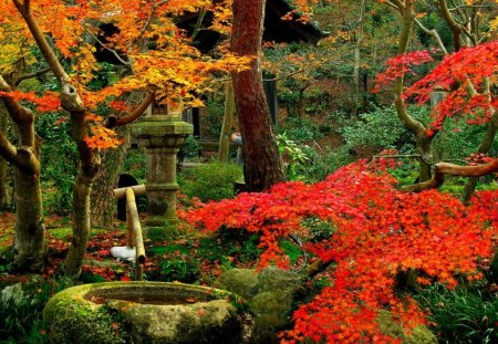 Fall comes to the Garden - fall, red, garden, well