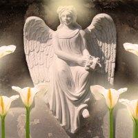 ♥     Angel of Light     ♥