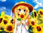 Matsushima Michiru In Sunflower Field