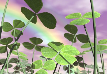Lucky Day - st patrick day, four leaf clover, clover, day, garden, rainbow, lucky