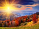 AUTUMN SUNBURST