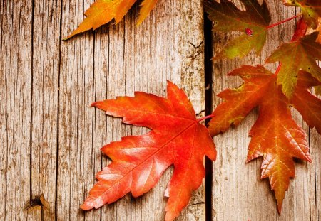 Rustic Autumn - autumn, boards, wholesome, maple leaves, lady bug, farm, fall, bright, ladybug, orange, wood, country, barnboard, rustic, barn