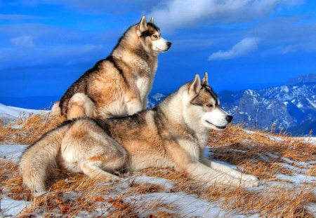 Handsome Couple - beautiful, peak, mountaintop, stare