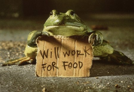 Poor Frog ! - amphibian, funny, green, demonstrate