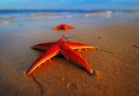 Stranded Starfish - water, sea, beach, red