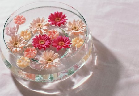 Fragrant water - harmony, gerberas, pink, smell, fragrant, flowers, colors, water, nice, petals, table, beautiful, lovely, daisies, soft, pretty, still life, delicate