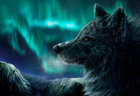 Alpha - blue, fur, face, head, canine, dog, animal, wolf, alpha, wild