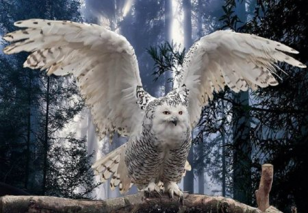 Taking Flight   for Carl {Googlehead} - animals, birds, other, snowy owl, nature