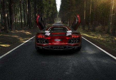 Lamborghini - forest, road, cars, lamborghini