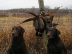2 of my hunting dogs