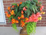 My Begonia Planter