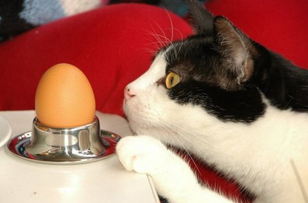 Who was first...? - who, egg, cat, paw, first, table
