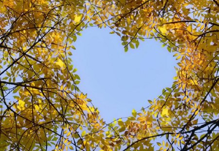 heart in the crown of trees - autumn, sky blue, birch, feeling, heart, trees, crown of trees, deciduous forest, leaves