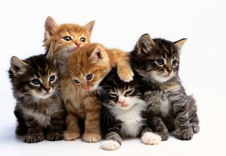 Cute Kittens Cats Animals Background Wallpapers On Desktop Nexus Image 1178898