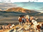 Wild Horses F2