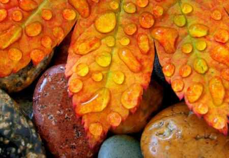Waterdrops on leaf - autumn, peaceful, splendor, colors, water, fall, beautiful, lovely, drops, leaf, stones, season