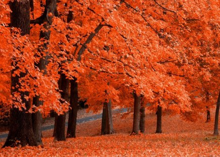 ORANGE Autumn - autumn, colorful, tree, trees, fall, bright, bark, forest, brown, orange, leaf, leaves