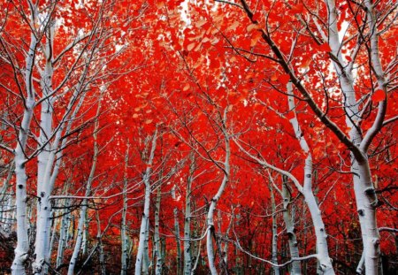 Autumn fall - autumn, fall, red, trees