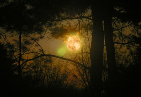 FULL MOON - forest, sky, moon, night, nature