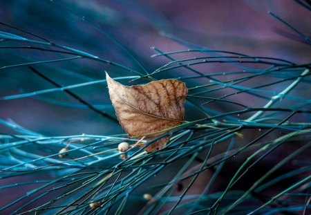 Autumn Leaf - autumn, beautiful, purple, leaf, photography, blue branch, macro