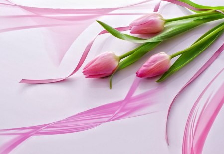 Pink tulips - fresh, flowers, harmony, tulips, ribbon, pink, nice, three, beautiful, vail, lovely, pretty, delicate, gift