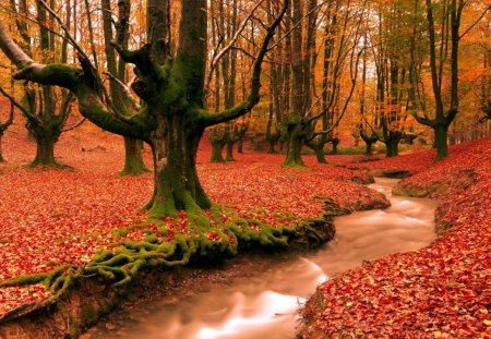 colors of autumn - colors, forest, creek, nature, autumn