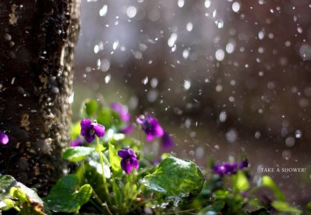 April Showers Flowers Nature Background Wallpapers On Desktop