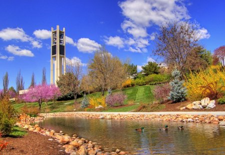 dont forget spring - colorful, photography, sky, water, pink, trees, beautiful, animals, clouds, pond, ducks