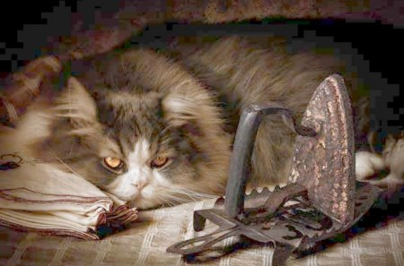 Cat - jointer, table, iron, tablecloth, cat