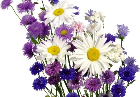 Pretty Purple Flowers - flowers, white, pink, petals, nature, stem, yellow, natural, purple, plant, daisy, leaves
