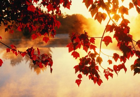 autumn on lake - autumn, lake, fall leaves, nature
