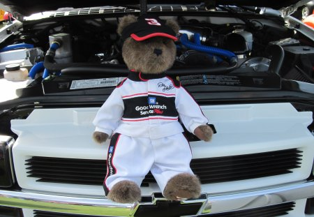 GM teddy bear - brown, white, photography, GMC, black, bear