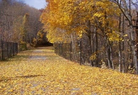 autumn road - trees, yellow, nature, autumn