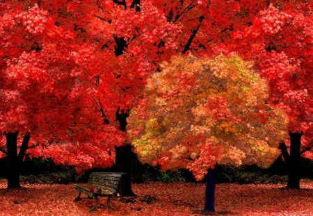 autumn park - autumn, bench, forest, red