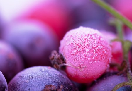 Forest fruits - autumn, food, juicy, pink, nice, summer, nature, forest, beautiful, purple, delicious, violet, fruits