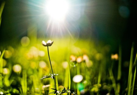 Amazing - beautiful, light, field, summer, green, nature, amazing, sun