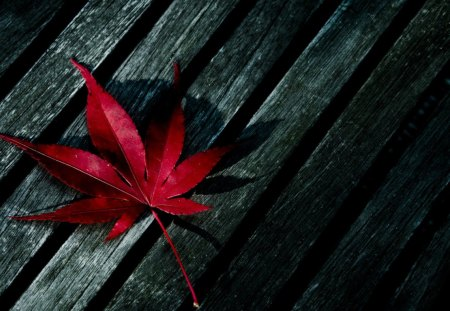 A leaf - autumn, beautiful, evening, leaf, bloody, lonely, red, grey