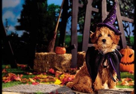 Halloween pups - dogs, costume, fall, halloween