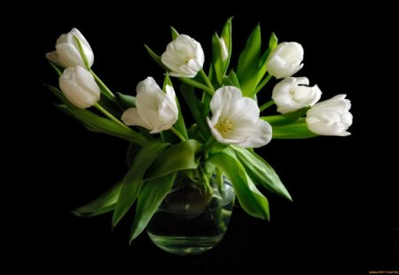 Pure SPRING♥ - flowers, white, wonderful, tulips, nature, pure, spring, green, love, arrangement
